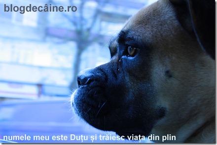 blogdecaine_dutu