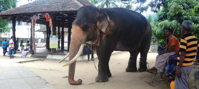 SRI LANKA, acest Ceylon de secol XXI-partea I